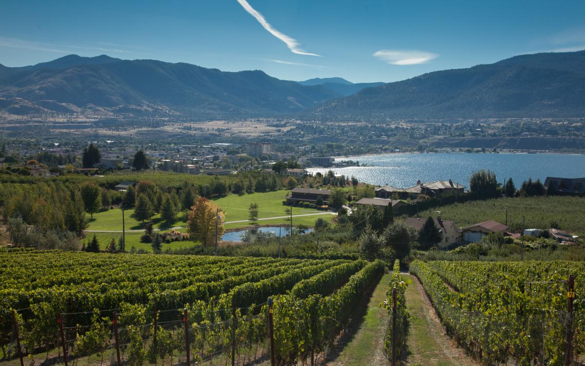 Penticton vineyards